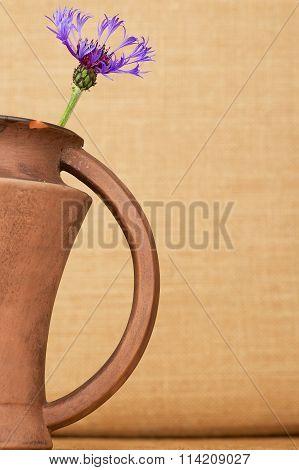 Cornflower (centaurea cyanus) in the brown ceramic pitcher against the beige background.