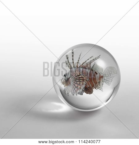 Lionfish In Crystal Ball