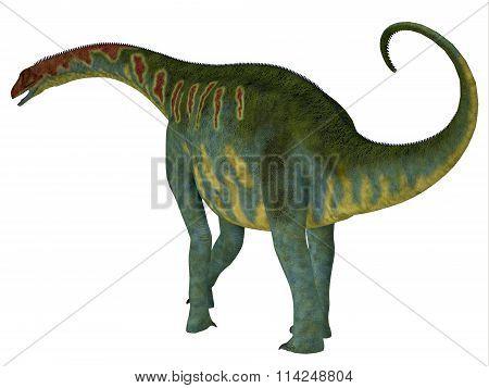 Jobaria Dinosaur Tail