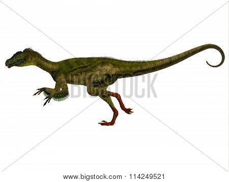 Ornitholestes Side Profile