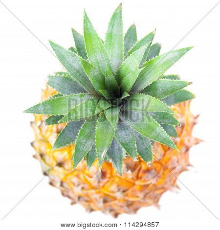 Top Of Ripe Pineapple