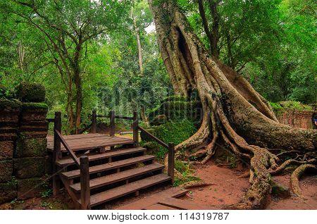 Ancient Khmer Temple Of Ta Prohm. Angkor Cambodia