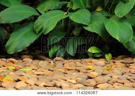 Plant In The Garden With Rough Pile Of Stones
