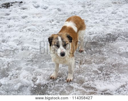 Homeless Dog On The White Snow. Pets