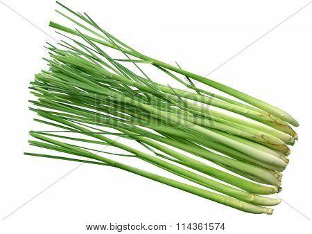 Group of fresh lemongrass stems isolated on white