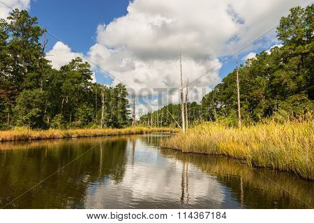 Water inlet along wetlands of Pamlico River in coastal region of North Carolina. poster