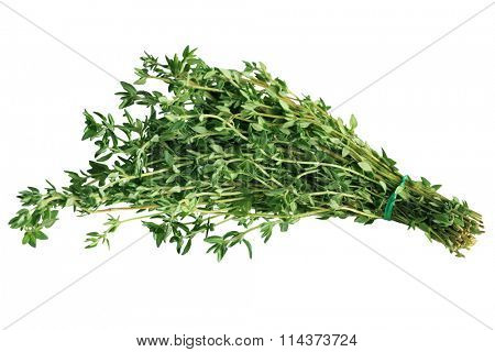 Bundle of fresh thyme isolated on white background