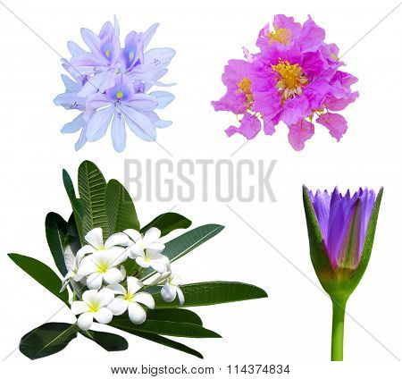 Colorful tropical flower set isolated on white
