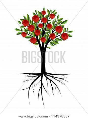 Pomegranate decorative tree with roots and fruits
