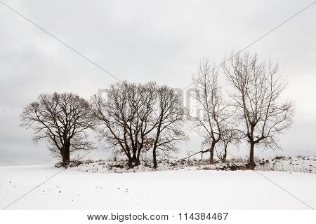 Winterlandscape with trees