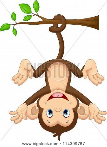 Cute baby monkey hanging on tree
