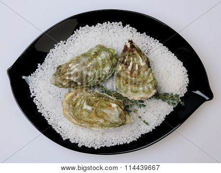 plating three oysters on a black plate isolated on white background