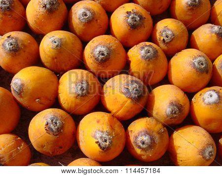 Atlantic Forest fruits