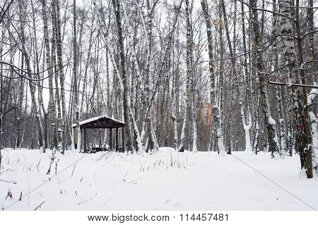 Alcove Between Trees Covered With Snow
