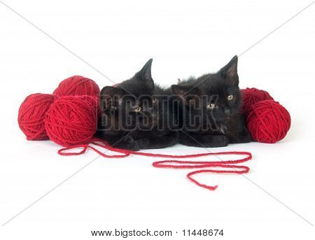 Two black kittens with balls of red yarn on white background poster