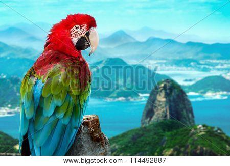 Red Macaw in Rio de Janeiro, Brazil