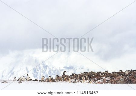 Antarctica Penguin Rookery