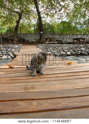 Wooden bridge and cat