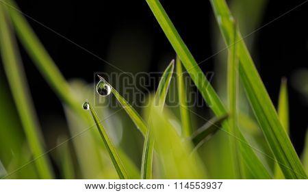 Green Grass Water Drop