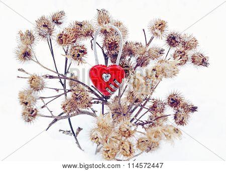 Love through the thorns