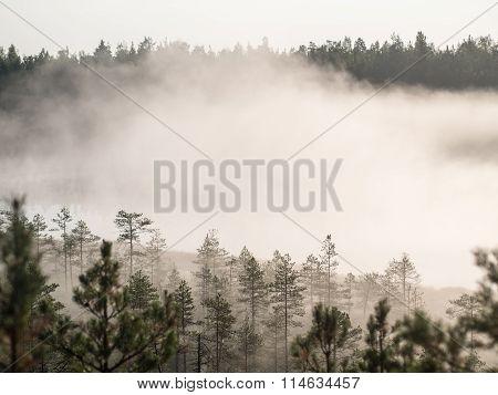 Intense Morning Fog