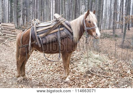 Brown Horse With Yellow Mane And Saddle In Forest