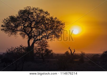 Sunrise Landscape In Kruger National Park