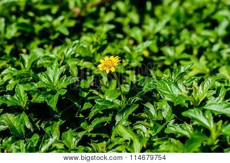 Flower On Green Background