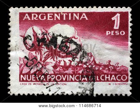 ARGENTINA - CIRCA 1956: a stamp printed in the Argentina shows Cotton Plant and Harvest, Elevation of the Territory Chaco to Province, circa 1956