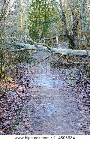 Tree On Trail