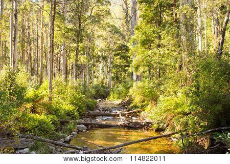 Delatite River Trail at Mt Buller