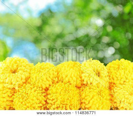 Beautiful boquet  on nature  background
