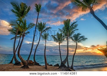 Tropical Beach With Palm Trees And Ocean