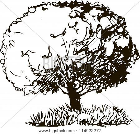 deciduous tree with leaves and grass