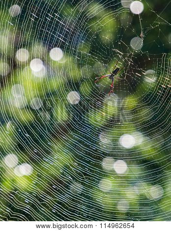 Colorful spider on the web