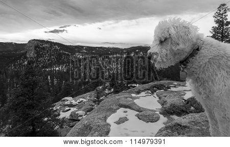 Teig coming into the lanscape shot in Staunton State Park Colorado.