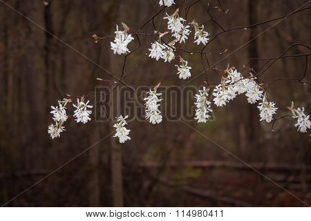 White Blossoms in Dark Forest