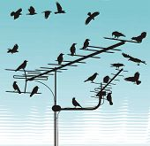 black silhouettes of the crows on the television antenna poster