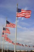 several american flags waving in the wind with blue skies poster