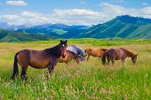 The herd of horses is grazed on a summer green meadow poster