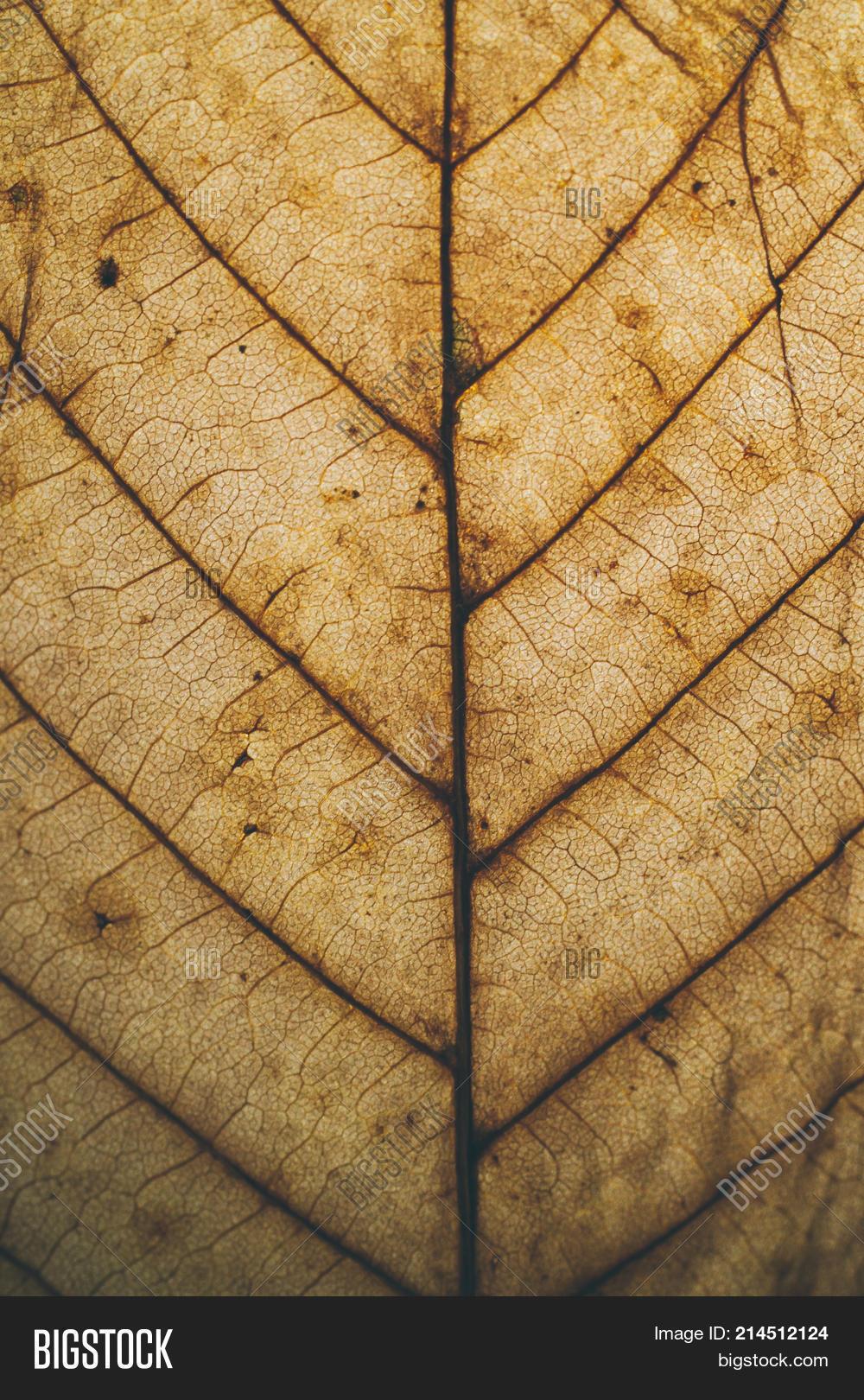 Brown Leaf Texture Image & Photo (Free Trial) | Bigstock