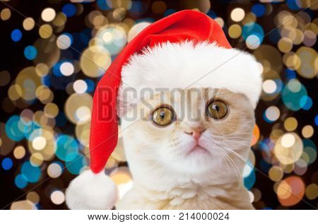 christmas, pets and animals concept - close up of scottish fold cat in santa hat over lights background