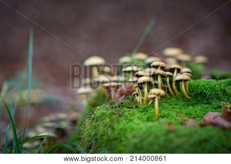 Poisonous mushroom growing in forest. Pure poison, soft focus. Deadly toadstoo, soft focus.
