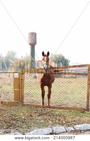 A young beautiful brown horse is standing on a farm outside the fence. Outdoors.