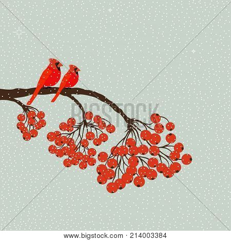 Two red birds cardinal on branch with berries