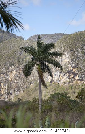 Cuba. Tropical nature of Vinales Valley.landscape in sunny day