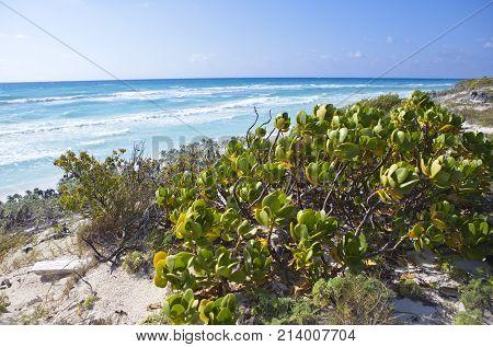 Sandy beaches of the Caribbean Sea and sunshades on Cayo Largo's island Cuba