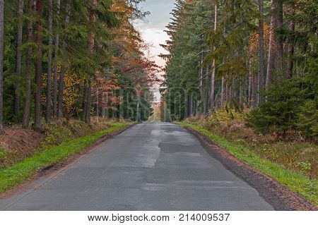 Asphalt, narrow straight road. On both sides of the road grows a mixed forest. Tall pines and deciduous trees. It is autumn. The leaves are yellow and brown.