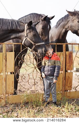 A little boy stands near the black beautiful horses and smiles sweetly. One of the horses caresses the boy's face. Outdoors.