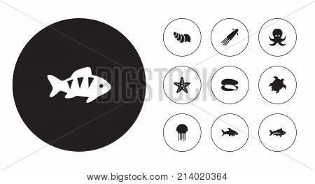 Collection Of Devilfish, Shark, Shell And Other Elements.  Set Of 10 Sea Icons Set.